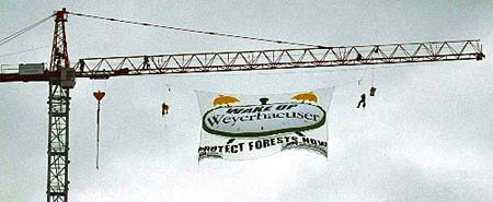 Banner: WAKE UP Weyerhaeuser - PROTECT FOREST NOW